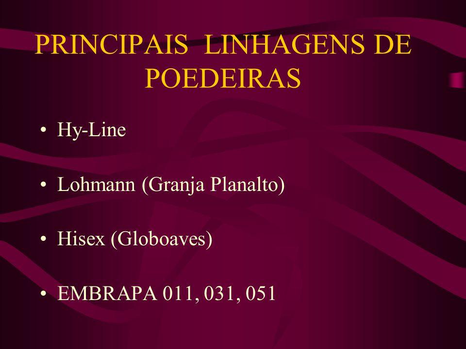 PRINCIPAIS LINHAGENS DE POEDEIRAS
