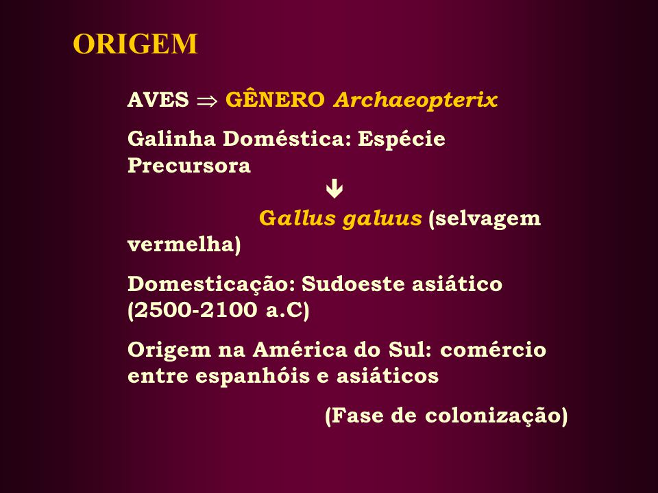 ORIGEM AVES  GÊNERO Archaeopterix