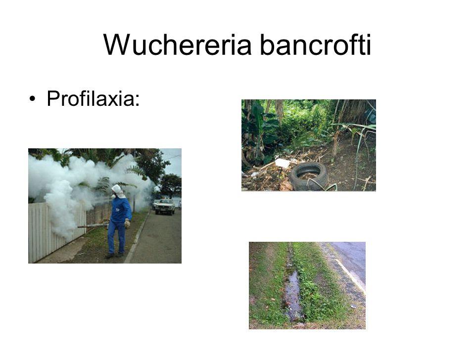 Wuchereria bancrofti Profilaxia: