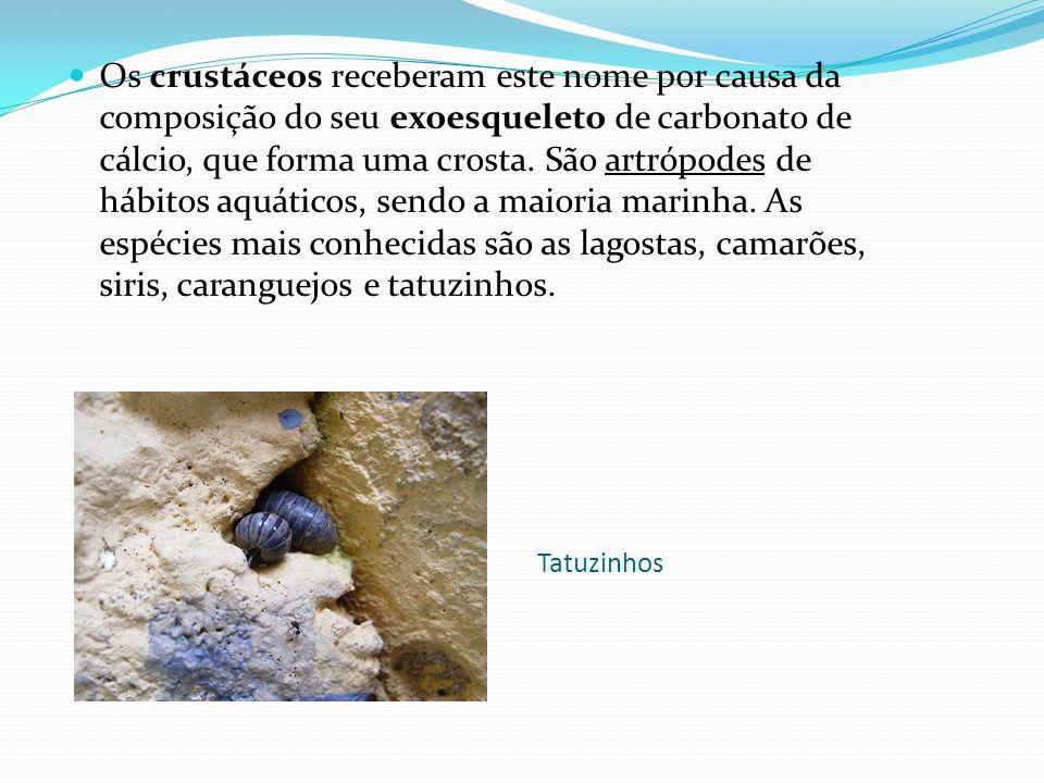 Os crustáceos receberam este nome por causa da composição do seu exoesqueleto de carbonato de cálcio, que forma uma crosta. São artrópodes de hábitos aquáticos, sendo a maioria marinha. As espécies mais conhecidas são as lagostas, camarões, siris, caranguejos e tatuzinhos.