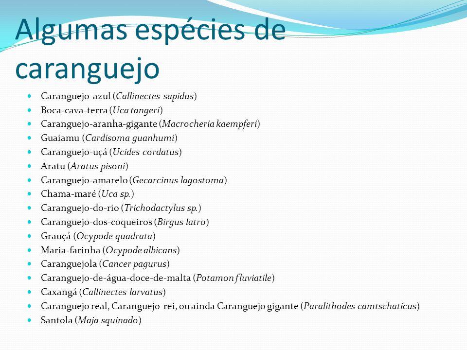 Algumas espécies de caranguejo