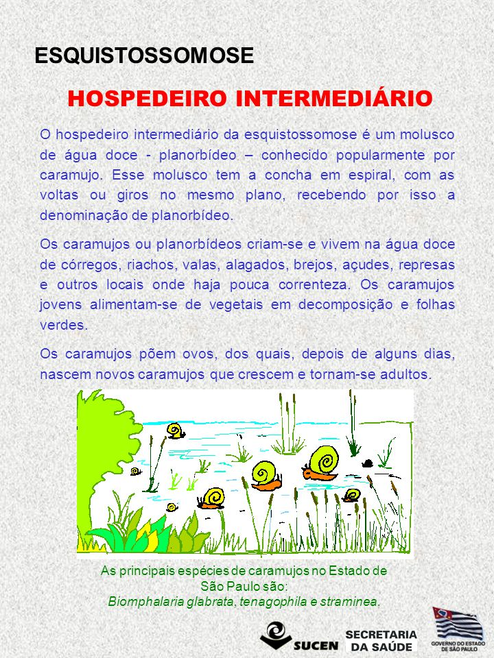 HOSPEDEIRO INTERMEDIÁRIO
