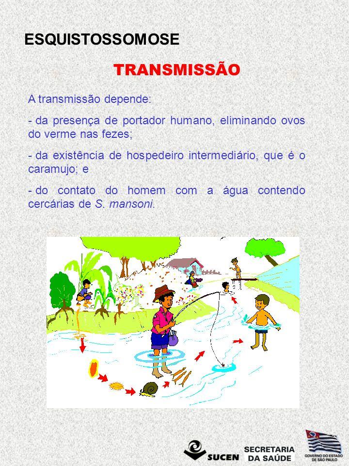 TRANSMISSÃO A transmissão depende: