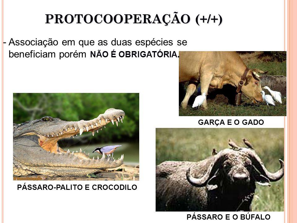 PROTOCOOPERAÇÃO (+/+)