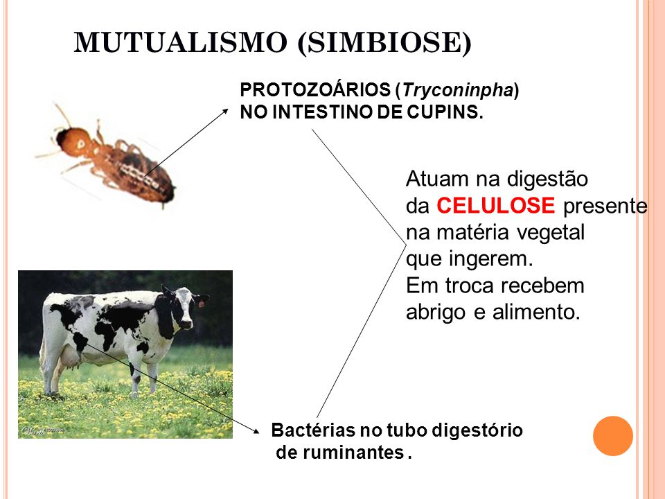 MUTUALISMO (SIMBIOSE)