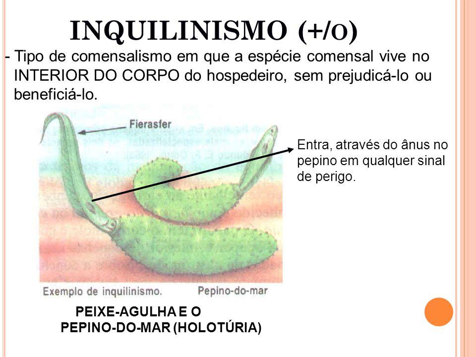 INQUILINISMO (+/o) Tipo de comensalismo em que a espécie comensal vive no. INTERIOR DO CORPO do hospedeiro, sem prejudicá-lo ou.