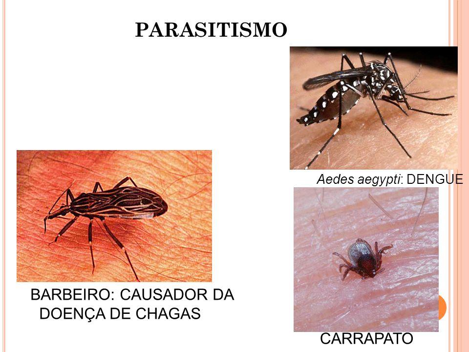 PARASITISMO BARBEIRO: CAUSADOR DA DOENÇA DE CHAGAS CARRAPATO