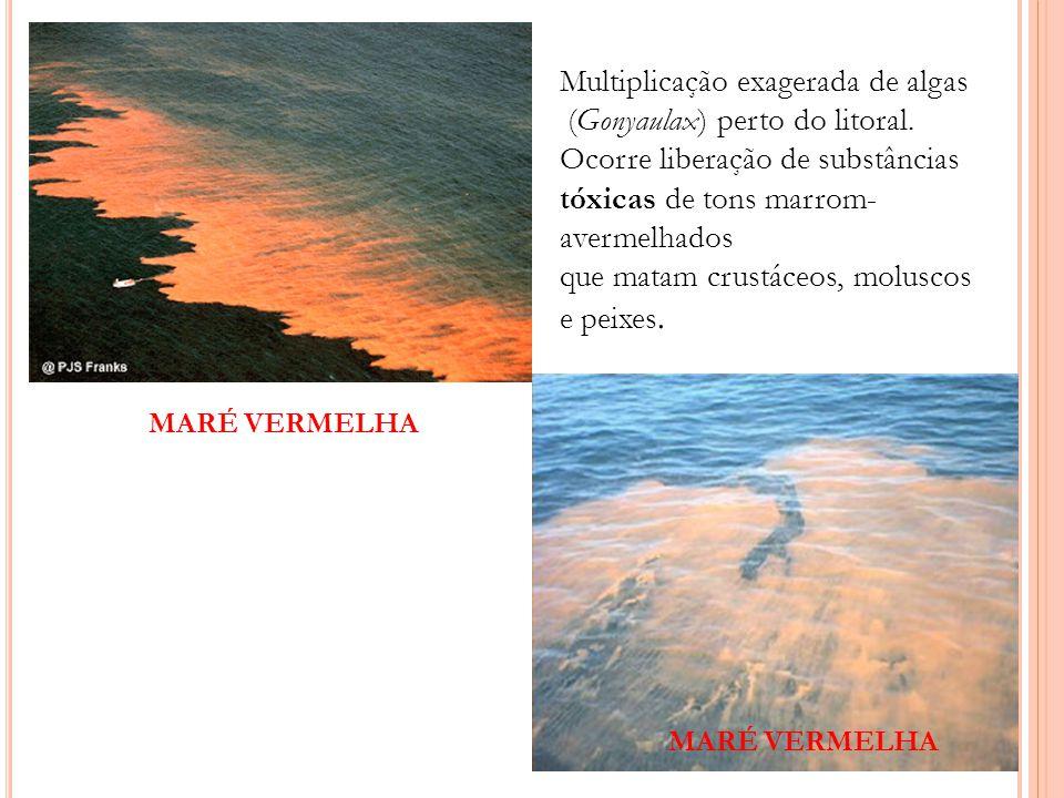 Multiplicação exagerada de algas (Gonyaulax) perto do litoral.