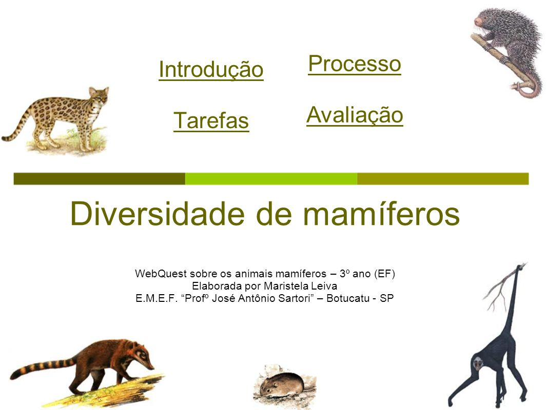 Diversidade de mamíferos
