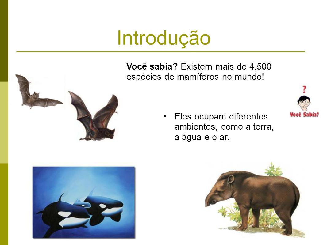 Introdução Você sabia. Existem mais de 4.500 espécies de mamíferos no mundo.