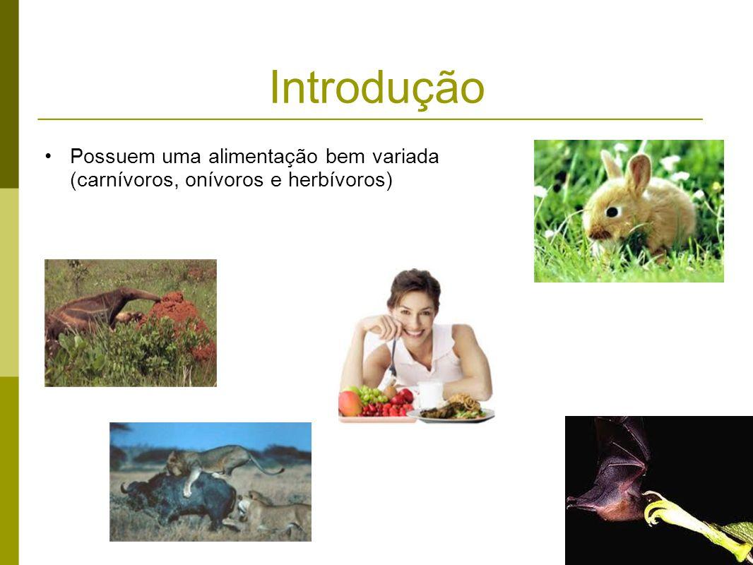 Introdução Possuem uma alimentação bem variada (carnívoros, onívoros e herbívoros)