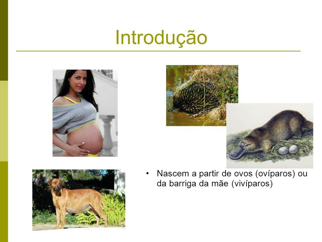 Introdução Nascem a partir de ovos (ovíparos) ou da barriga da mãe (vivíparos)