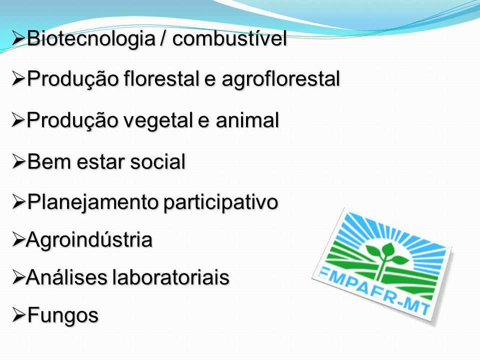 Biotecnologia / combustível