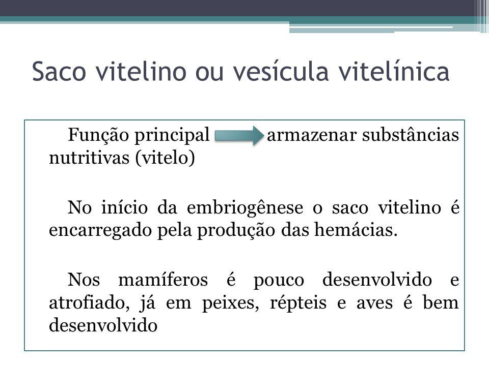 Saco vitelino ou vesícula vitelínica