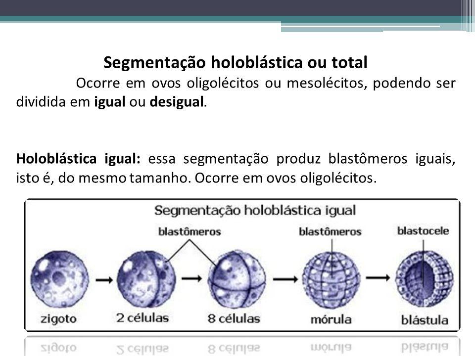 Segmentação holoblástica ou total