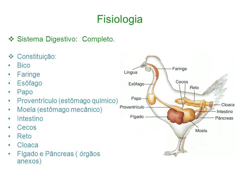 Fisiologia Sistema Digestivo: Completo. Constituição: Bico Faringe
