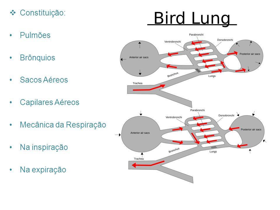 Constituição: Pulmões. Brônquios. Sacos Aéreos. Capilares Aéreos. Mecânica da Respiração. Na inspiração.