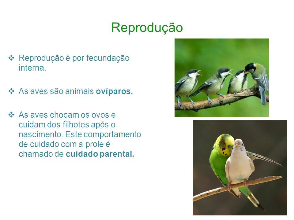 Reprodução Reprodução é por fecundação interna.