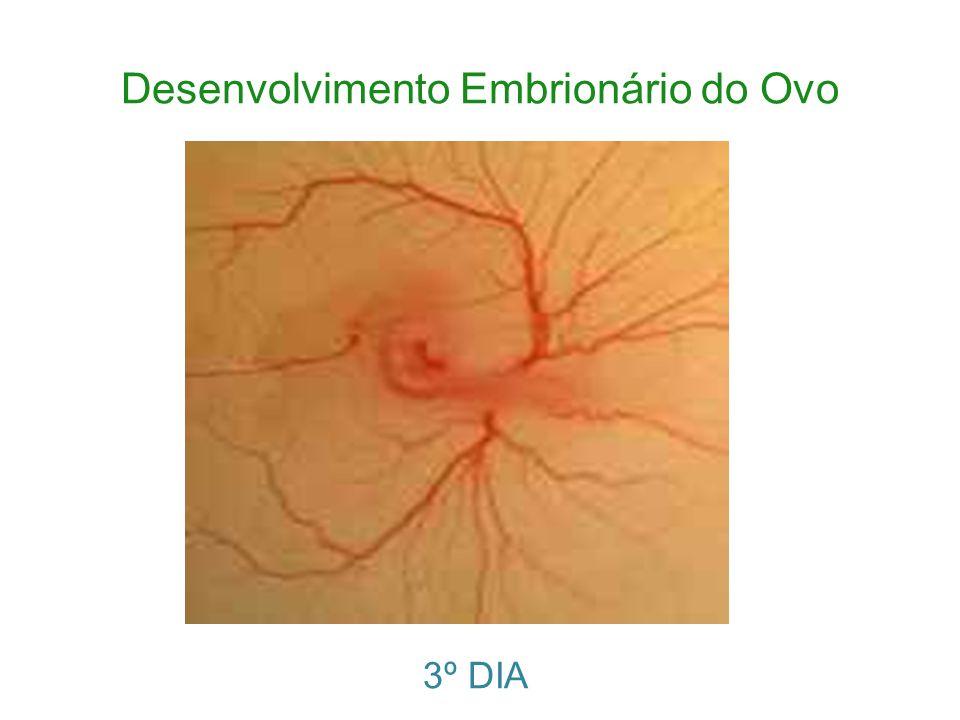 Desenvolvimento Embrionário do Ovo