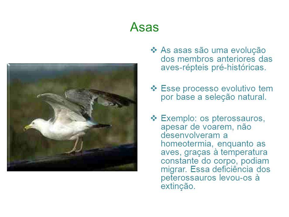 Asas As asas são uma evolução dos membros anteriores das aves-répteis pré-históricas. Esse processo evolutivo tem por base a seleção natural.