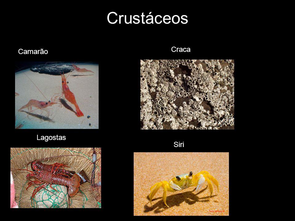 Crustáceos Craca Camarão Camarão Lagostas Siri