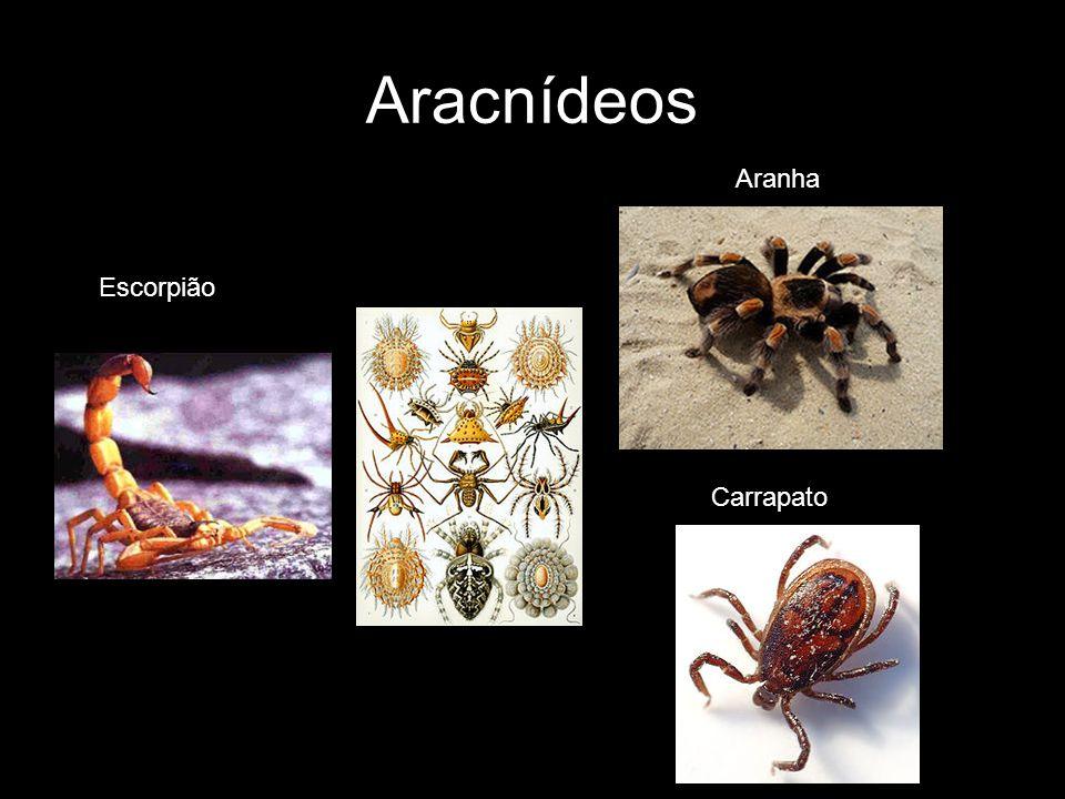 Aracnídeos Aranha Escorpião Carrapato