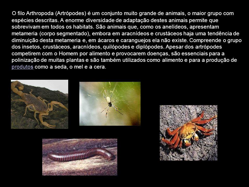 O filo Arthropoda (Artrópodes) é um conjunto muito grande de animais, o maior grupo com espécies descritas.