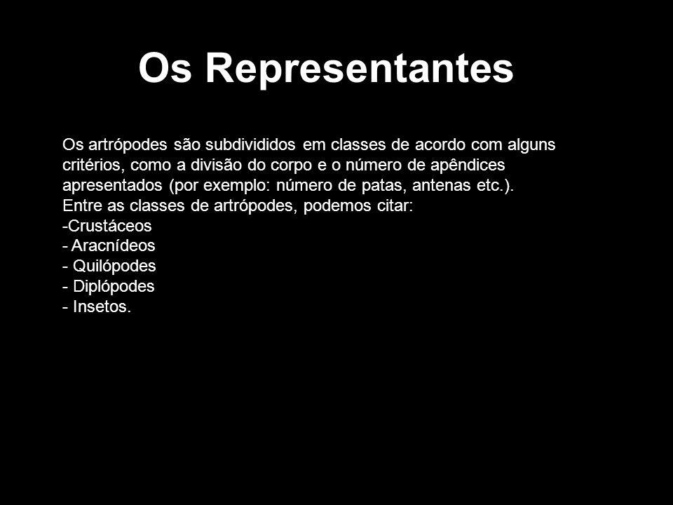 Os Representantes