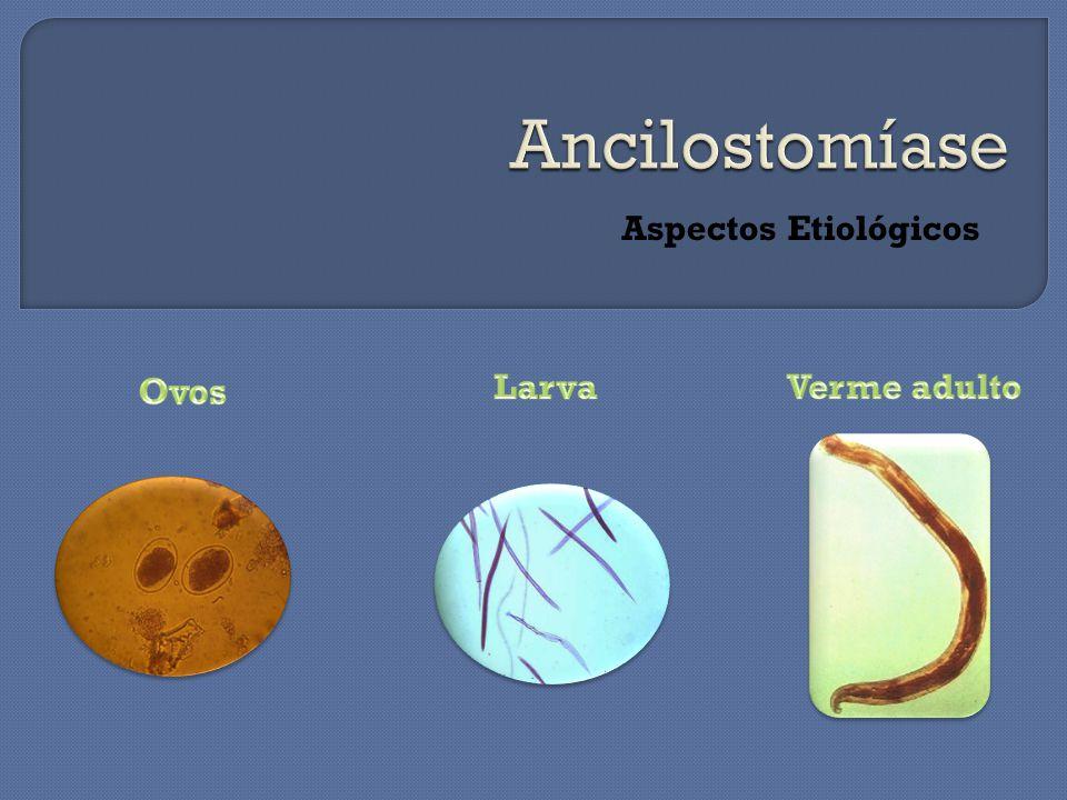 Ancilostomíase Aspectos Etiológicos Ovos Larva Verme adulto