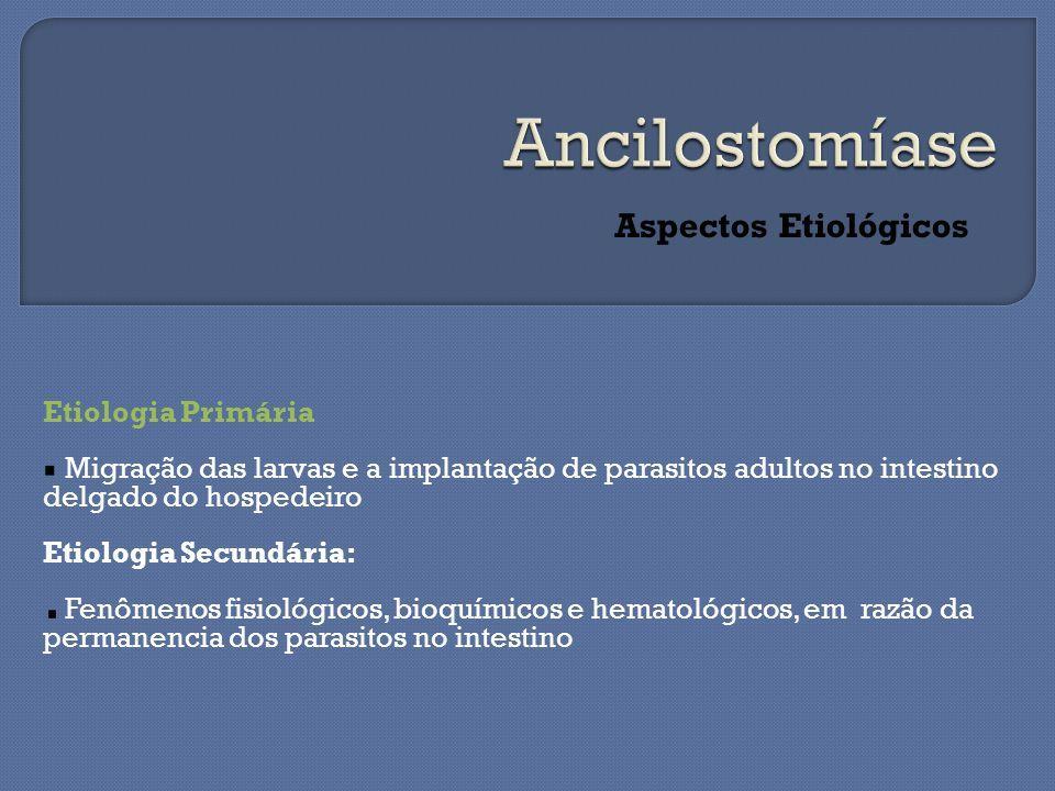 Ancilostomíase Aspectos Etiológicos Etiologia Primária