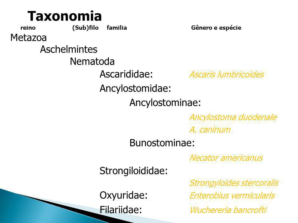 Taxonomia Metazoa Aschelmintes Nematoda