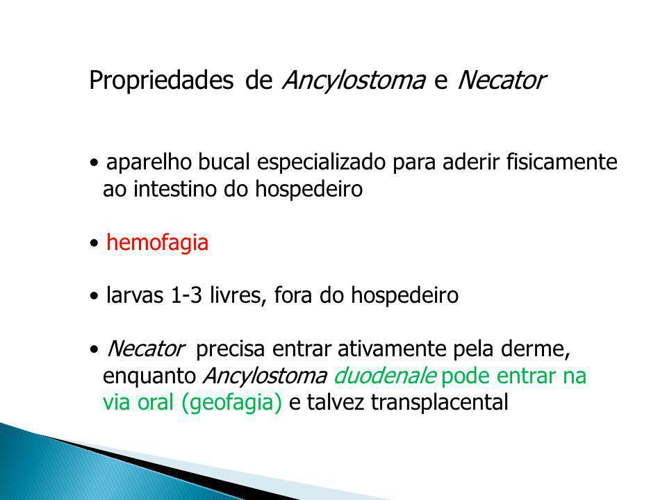 Propriedades de Ancylostoma e Necator