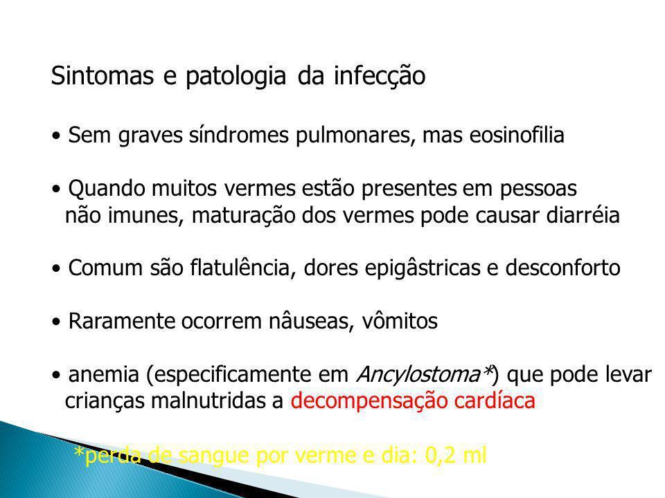 Sintomas e patologia da infecção