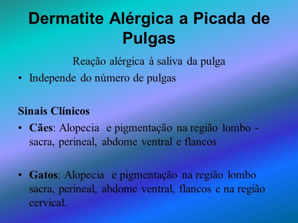 Dermatite Alérgica a Picada de Pulgas