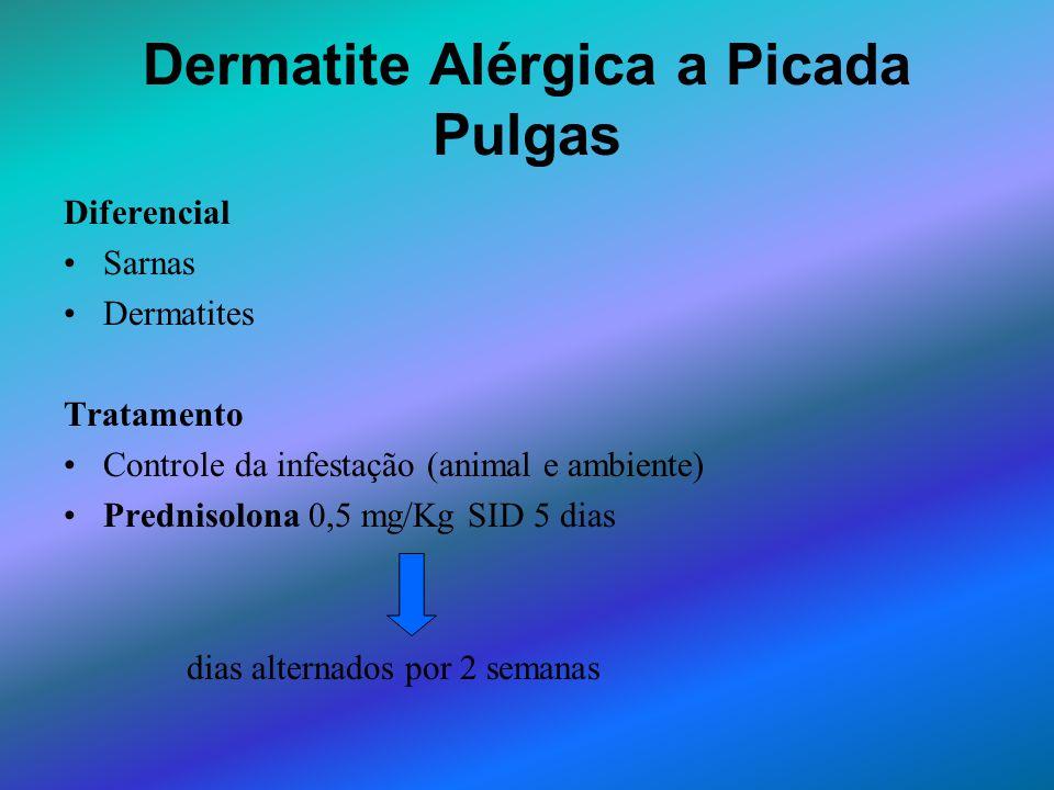Dermatite Alérgica a Picada Pulgas