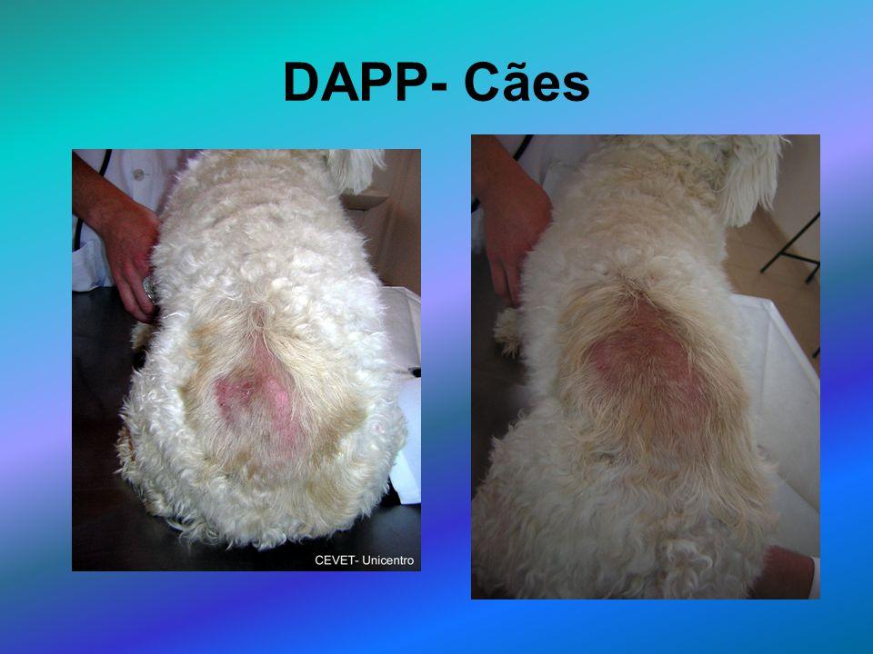 DAPP- Cães