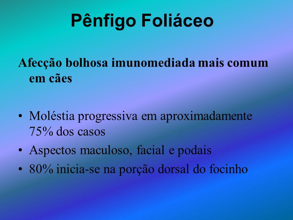 Pênfigo Foliáceo Afecção bolhosa imunomediada mais comum em cães