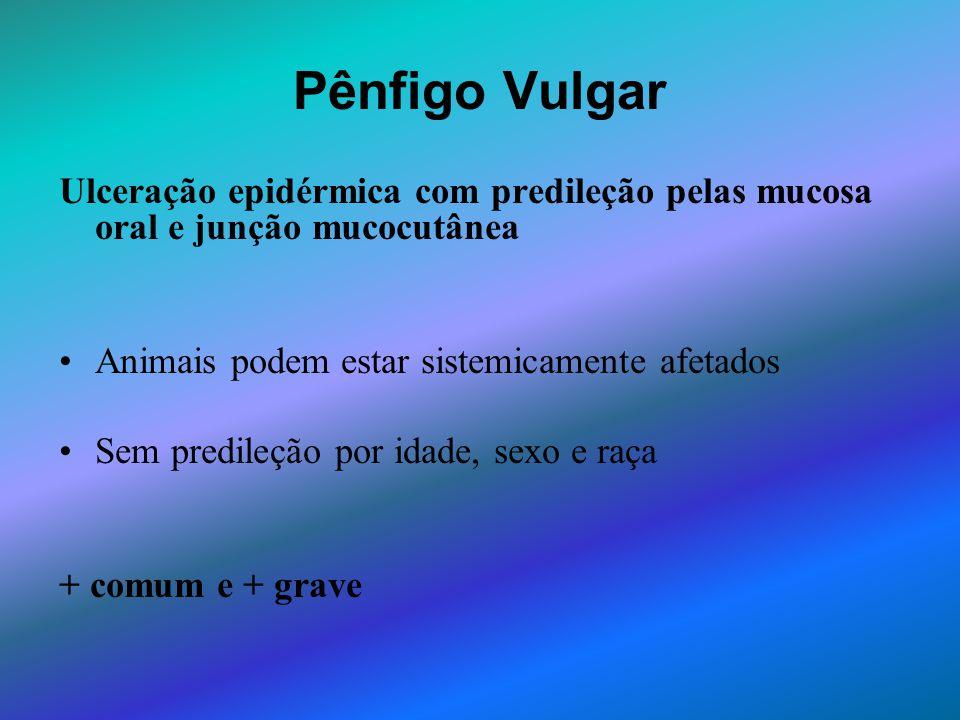 Pênfigo Vulgar Ulceração epidérmica com predileção pelas mucosa oral e junção mucocutânea. Animais podem estar sistemicamente afetados.