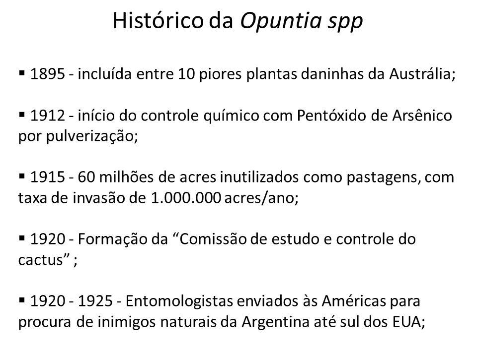 Histórico da Opuntia spp