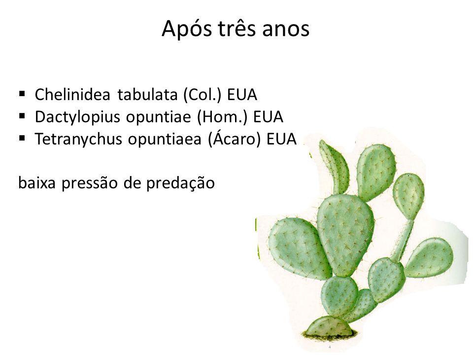 Após três anos Chelinidea tabulata (Col.) EUA