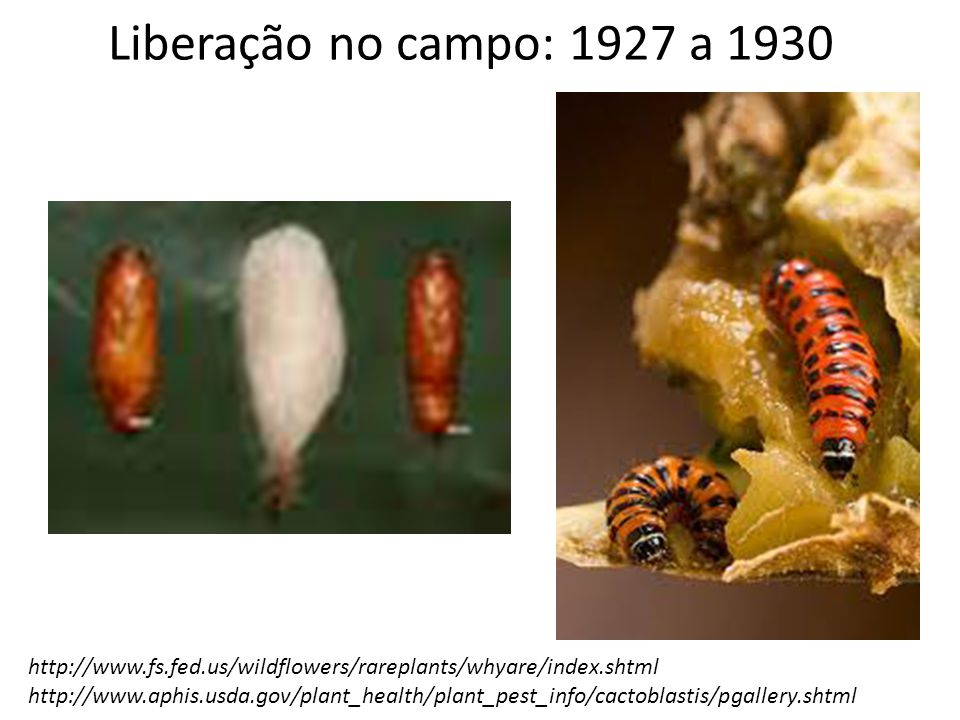Liberação no campo: 1927 a 1930 http://www.fs.fed.us/wildflowers/rareplants/whyare/index.shtml.