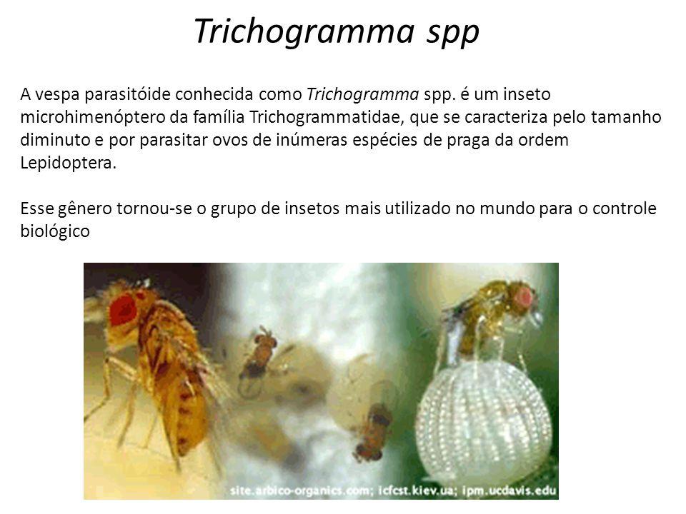 Trichogramma spp