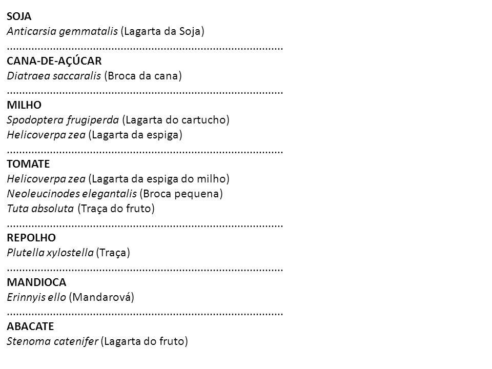 SOJA Anticarsia gemmatalis (Lagarta da Soja)