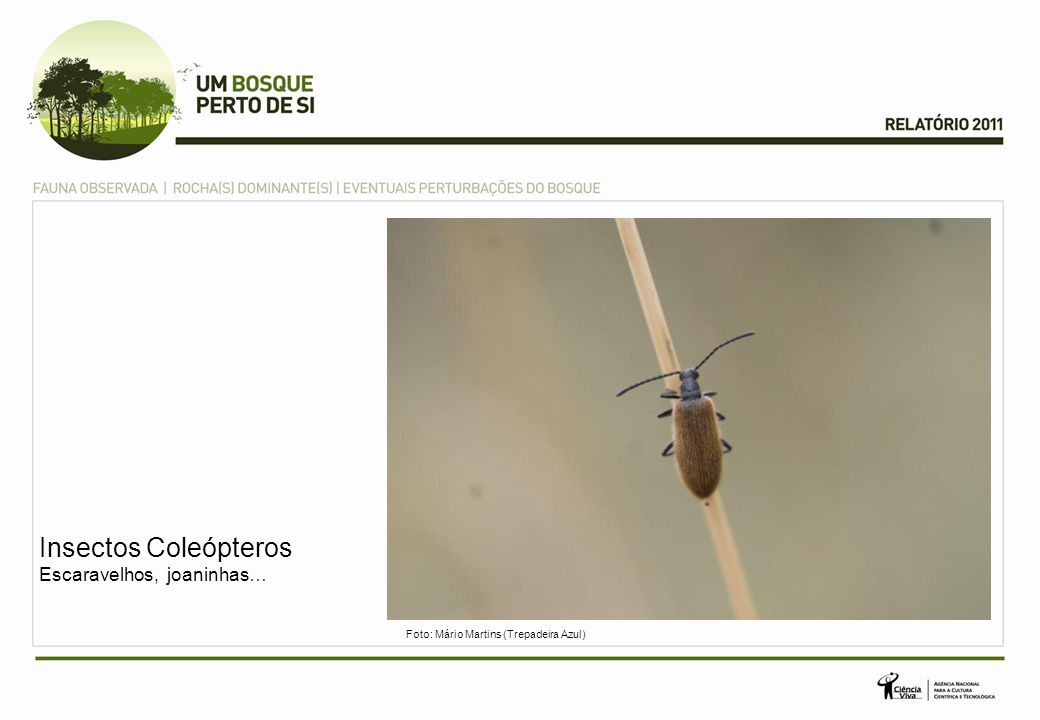 Insectos Coleópteros Escaravelhos, joaninhas…