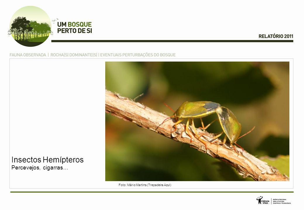 Insectos Hemípteros Percevejos, cigarras…