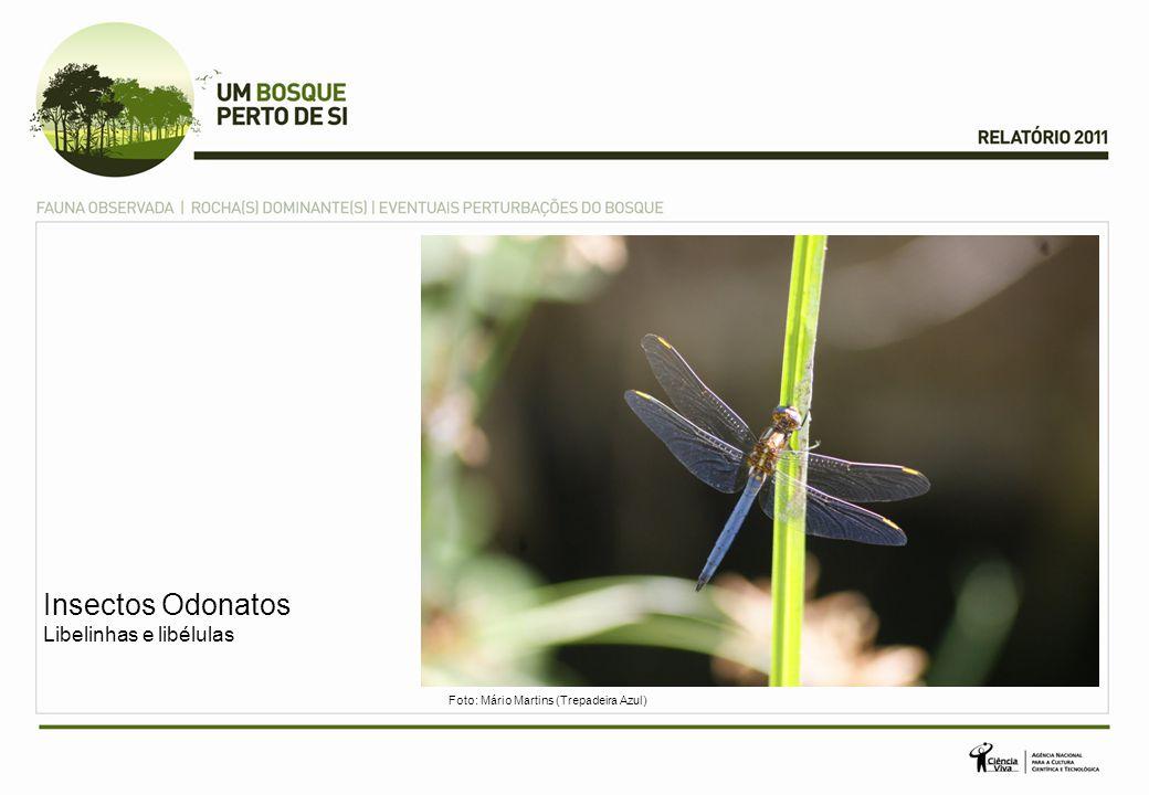Insectos Odonatos Libelinhas e libélulas