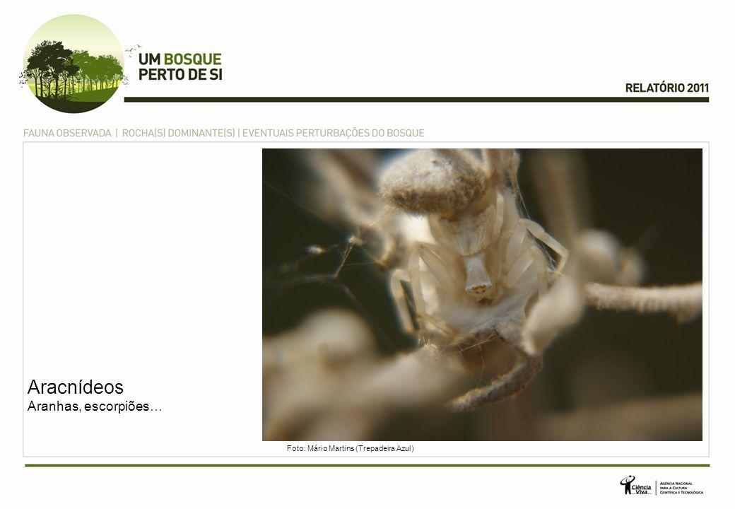 Aracnídeos Aranhas, escorpiões… Foto: Mário Martins (Trepadeira Azul)