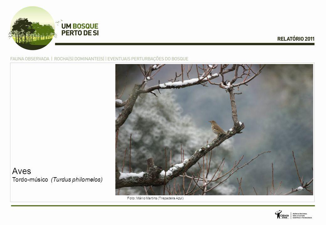 Aves Tordo-músico (Turdus philomelos)