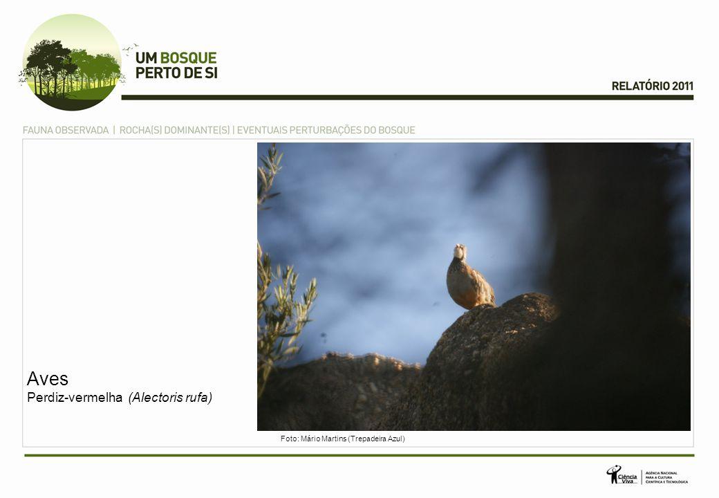 Aves Perdiz-vermelha (Alectoris rufa)