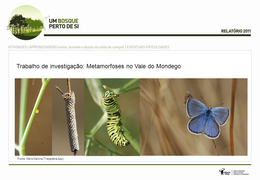 Trabalho de investigação: Metamorfoses no Vale do Mondego
